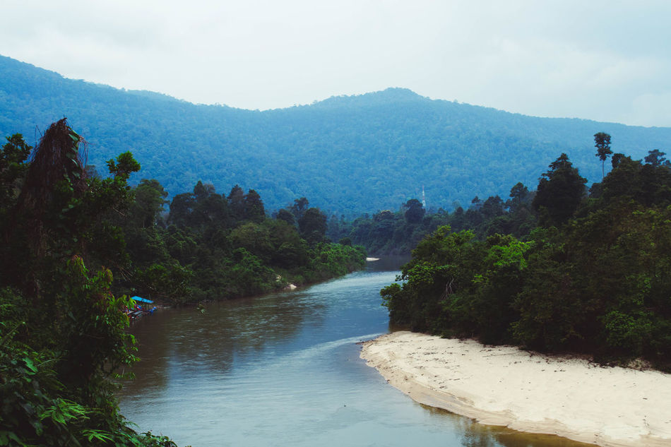 Scenic beauty from the Endau-Rompin National Park, Malaysia Asia <3 Beauty In Nature Day Forest Green High Angle View Kayak Landscape Malaysia Mountain Mountain Range National Park Nature Nature Outdoors Plant River Scenery Scenics Sky Stream Tranquil Scene Tranquility Tree Water