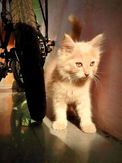 i'd like to play outside Cat Cats Kitten Kittens Mobile Photography Motorola Motorolamotog Motog Animals Mobilephoto