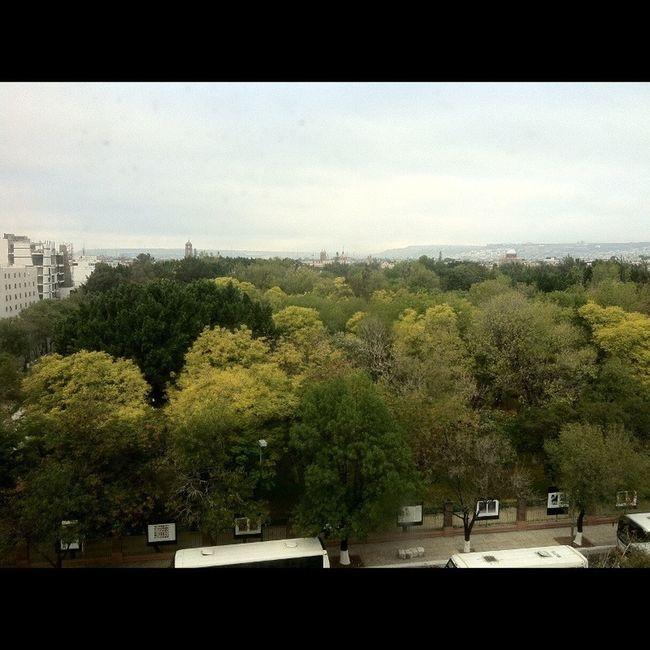 Tree Porn Landscape