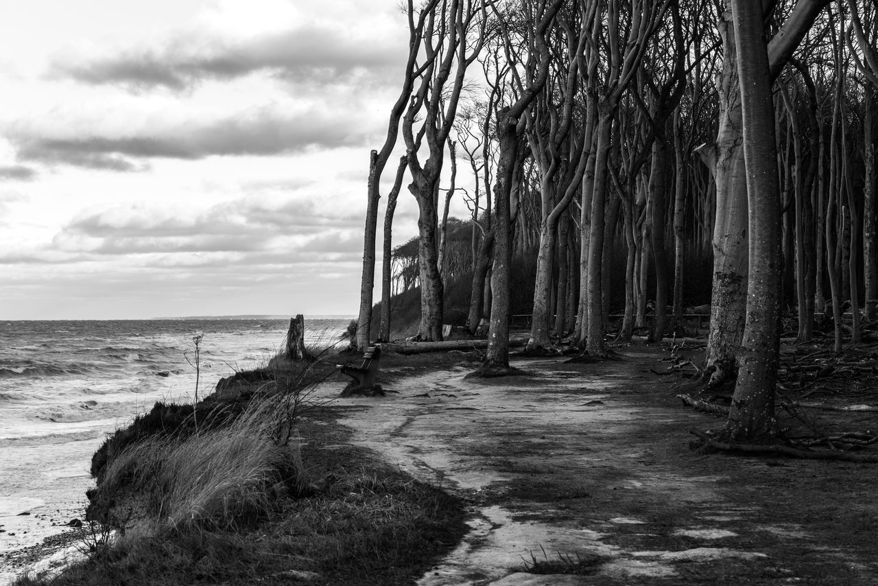 Beach Beauty In Nature Black And White Blackandwhite Photography Cloud - Sky Day Forest Germany Gespensterwald in Nienhagen, Germany Horizon Over Water Landscape Nature Nienhagen No People Ostsee Outdoors Sand Scenics Sea Sky Tranquil Scene Tranquility Tree Trunk Water Neighborhood Map