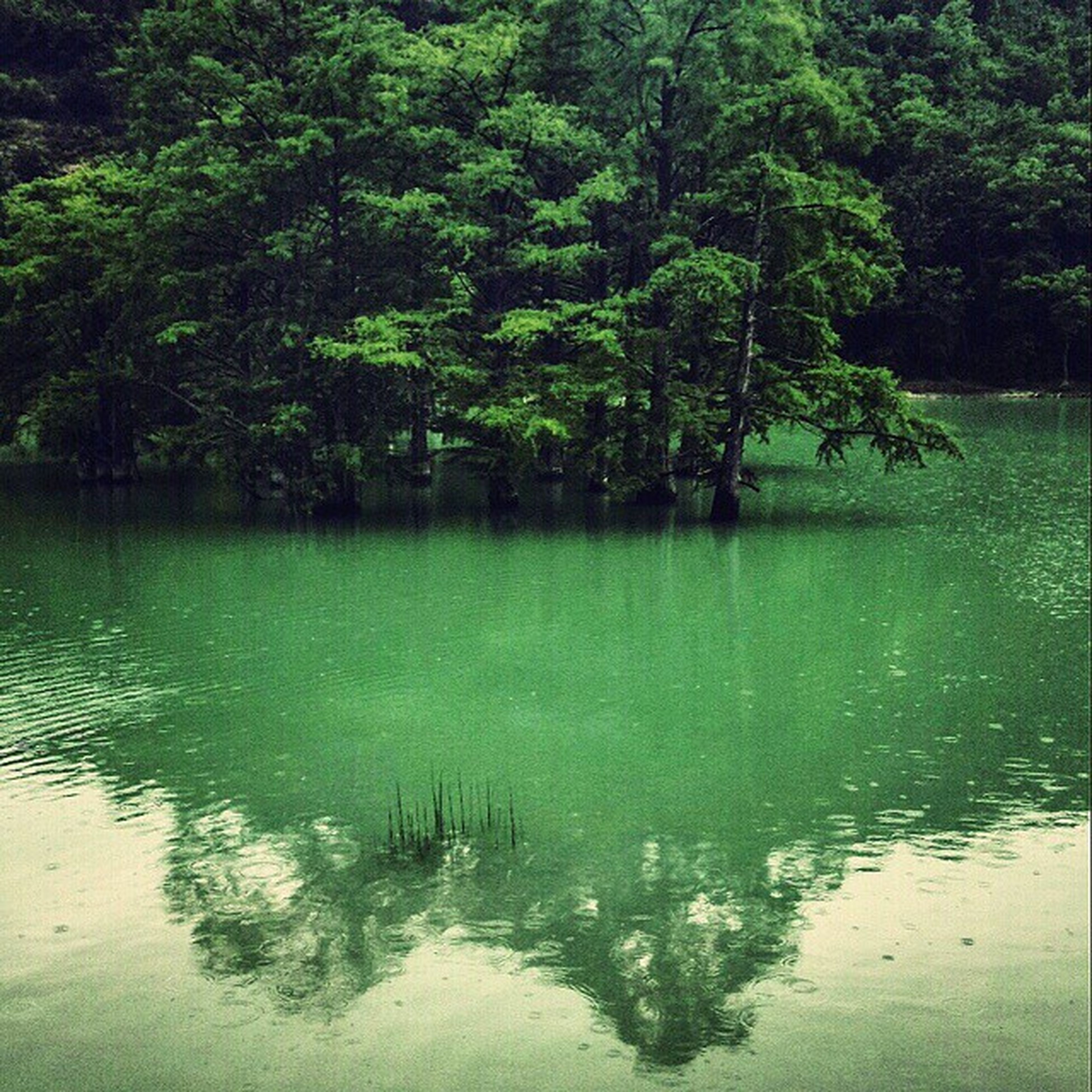 water, tree, lake, reflection, tranquility, tranquil scene, waterfront, beauty in nature, green color, nature, scenics, growth, bird, rippled, animal themes, forest, idyllic, wildlife, river, day