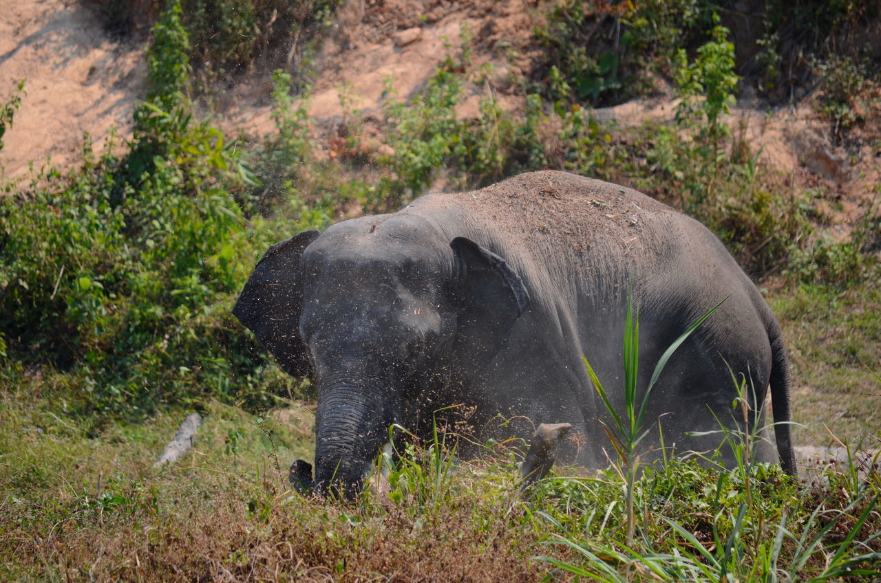 Animal Themes Animals In The Wild Beauty In Nature Chiang Mai   Thailand Elephant ♥ Enjoying Life Extreme Close-up Wildlife & Nature