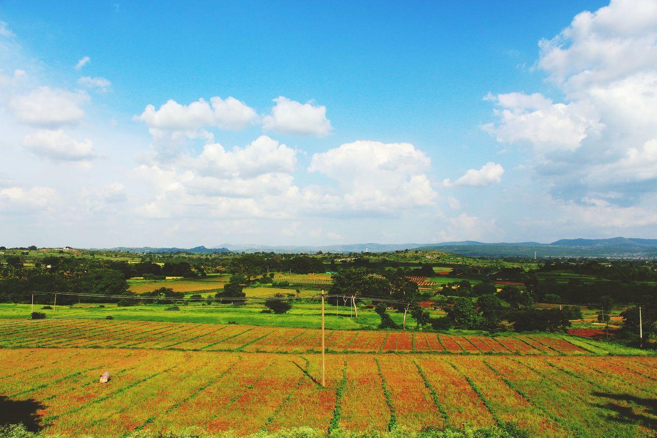 Naturistic view Eyeemnaturelover EyeEm Best Shots EyeEm Nature Lover Agriculture Field Cloud - Sky Crop  Growth Rural Scene Outdoors No People Landscape