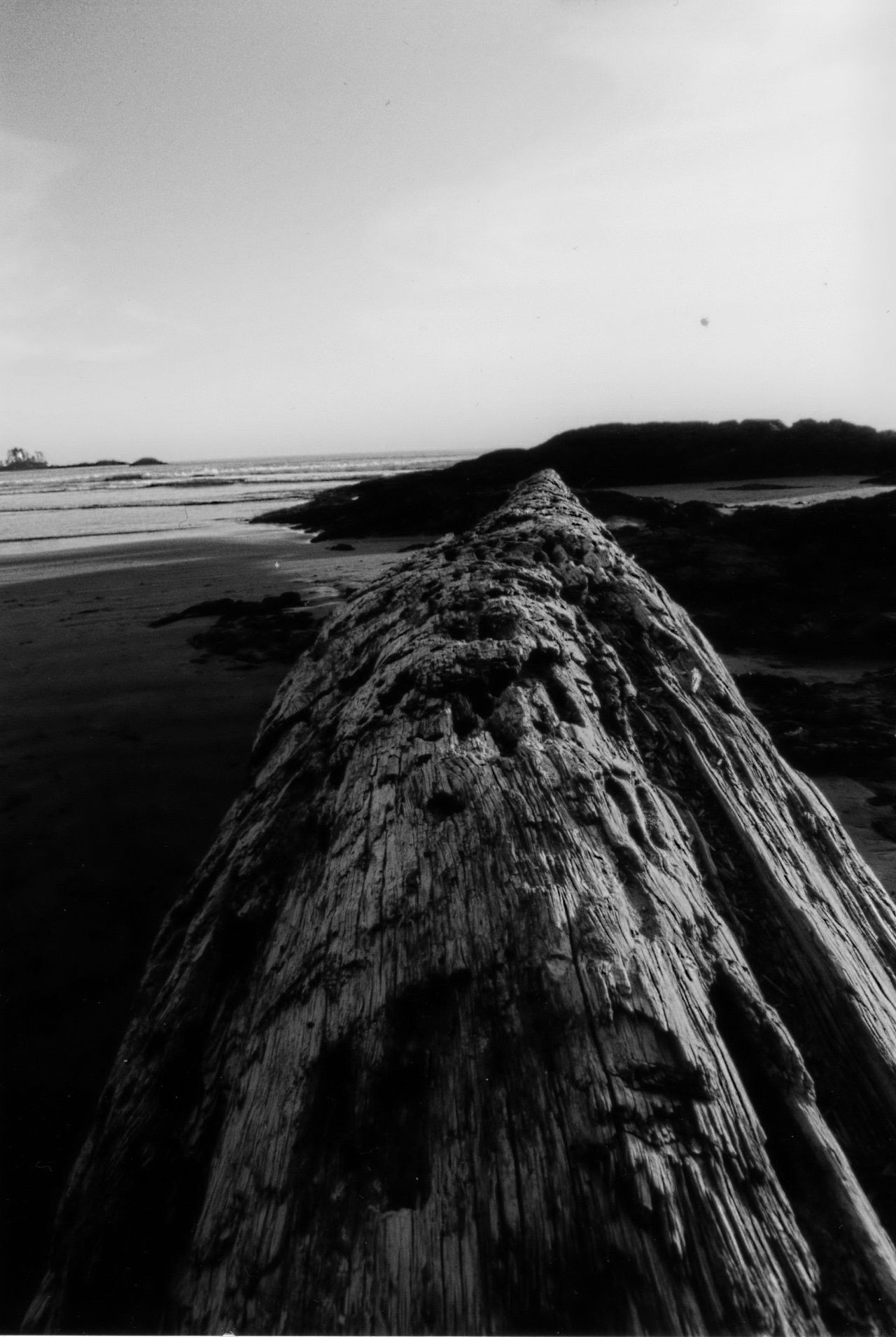 Beauty In Nature Black & White Day Nature No People Sea Sky Tranquil Scene Vancouver Island Canada Wood