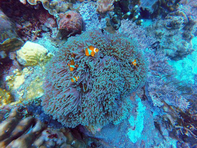 Malaysia Gopro Visitmalaysia Terengganu Terengganu Island Terengganuisland Divingphotography Water Diving Scubadiving Marine Life