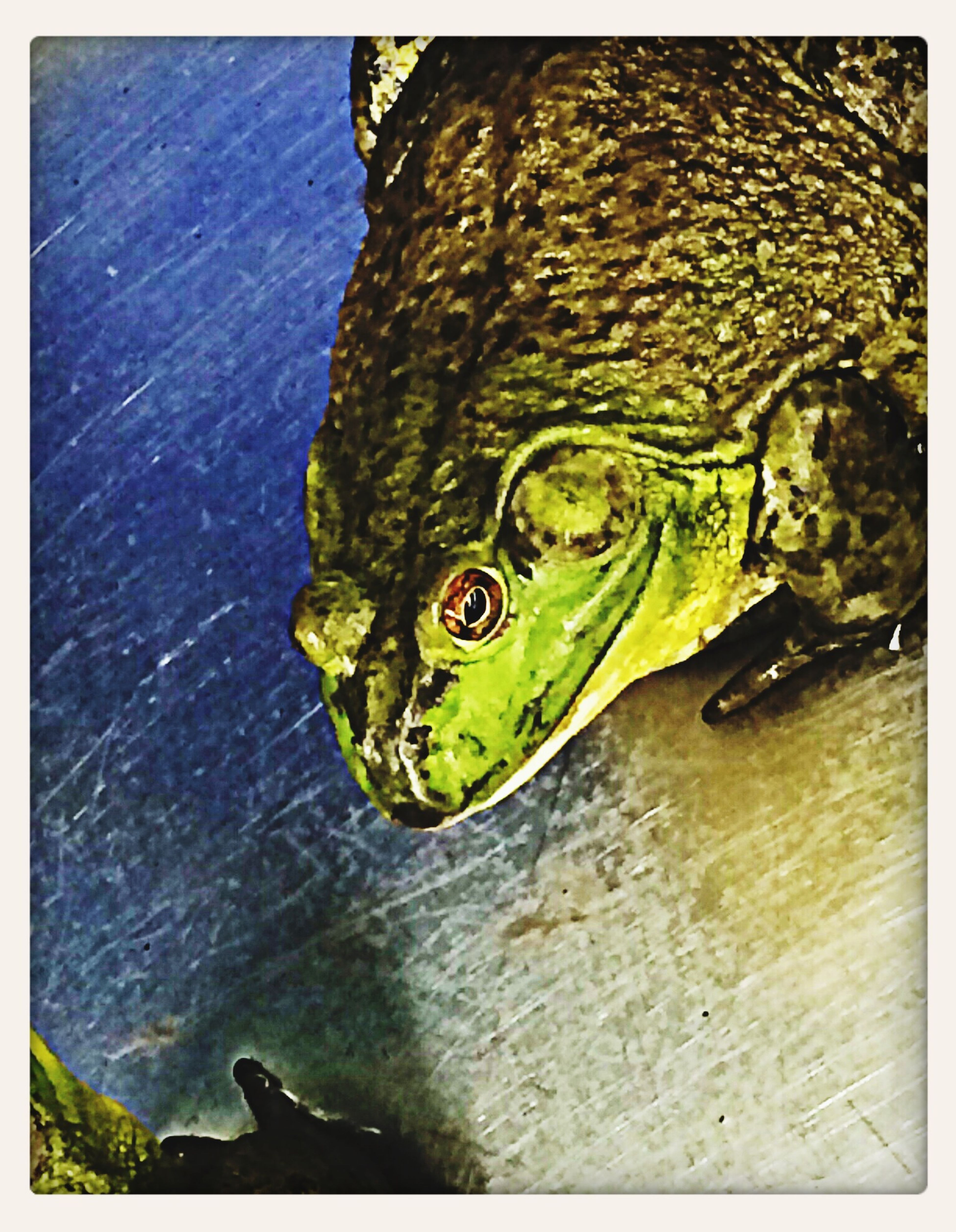 Frog Frog