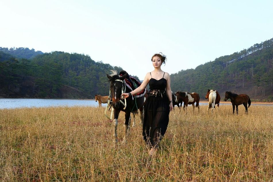 Beautiful stock photos of pferde, horse, domestic animals, horseback riding, livestock