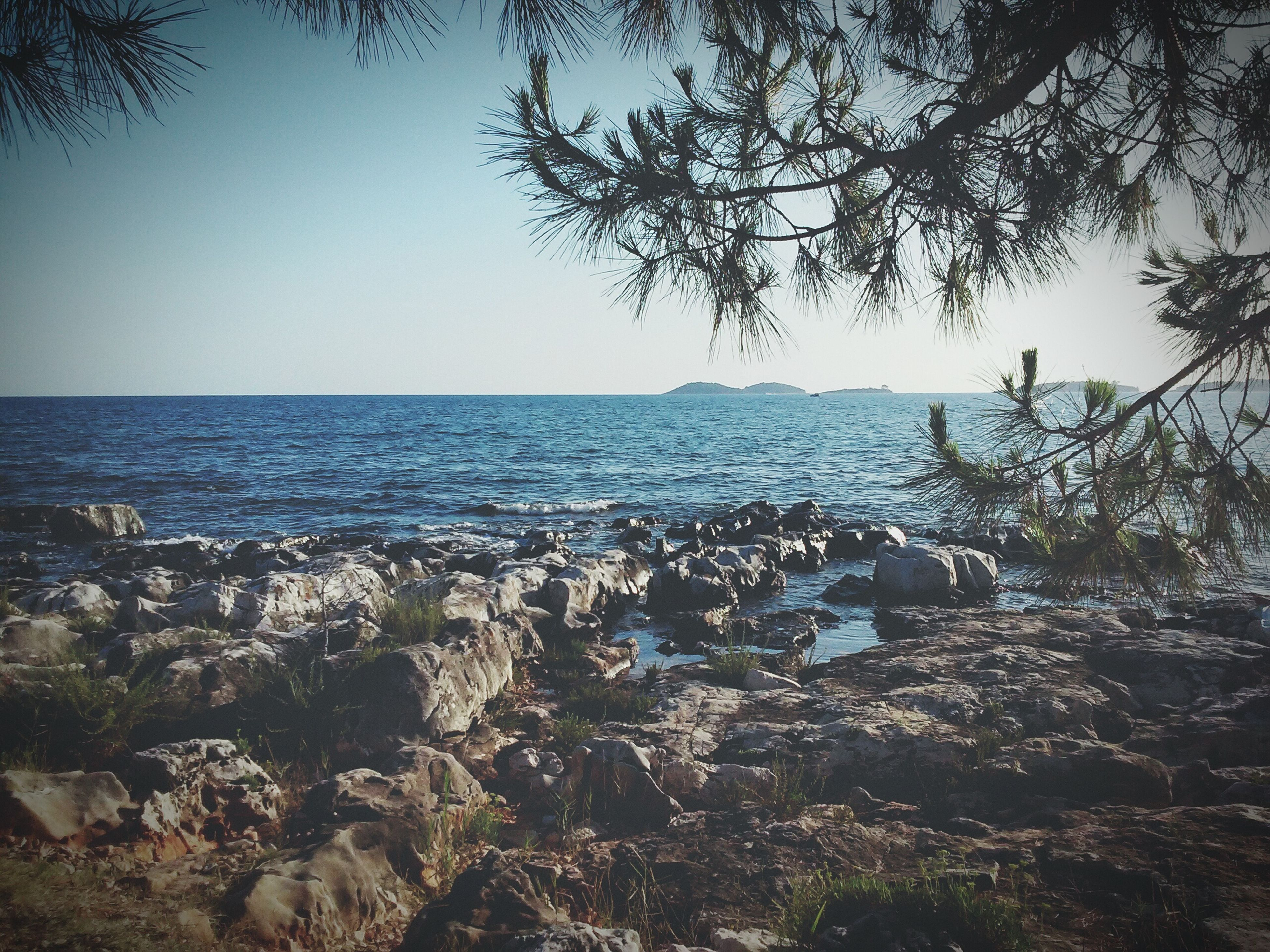 sea, horizon over water, clear sky, tranquility, tranquil scene, water, scenics, beauty in nature, tree, nature, beach, branch, copy space, shore, idyllic, growth, sky, sunlight, blue, day