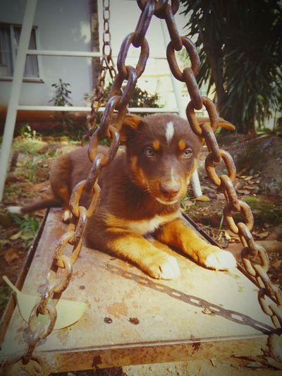 Dogslife Lazysunday Swingtime PuppyLove