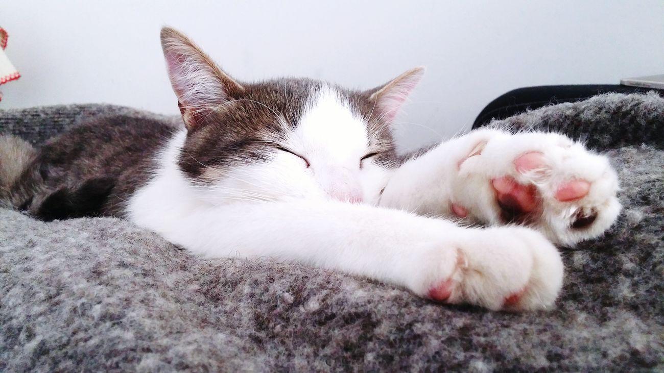Hard worker ^^ Cats 🐱 Cat Lovers Cat Cats Cats Of EyeEm Chat Cute Cat Pet Cute Cats (>^ω^<) Adorable Cat  Cute Pets Cute