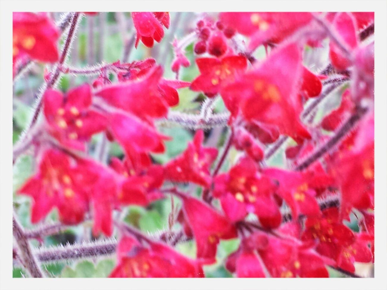 The Purist (no Edit, No Filter) Flower Collection Wonhglück