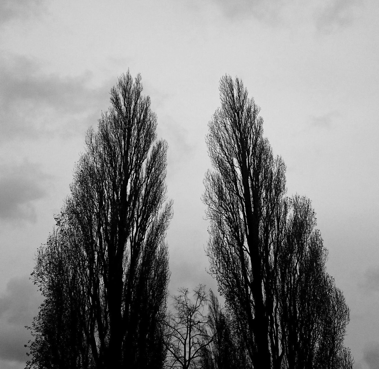 Another Stormy Day Darkness And Light Windyweather Trees Bendover to Eachother Shelter Couple Nature Blackandwhite Black & White Clouds And Sky The Places I've Been Today B&w RePicture Growth