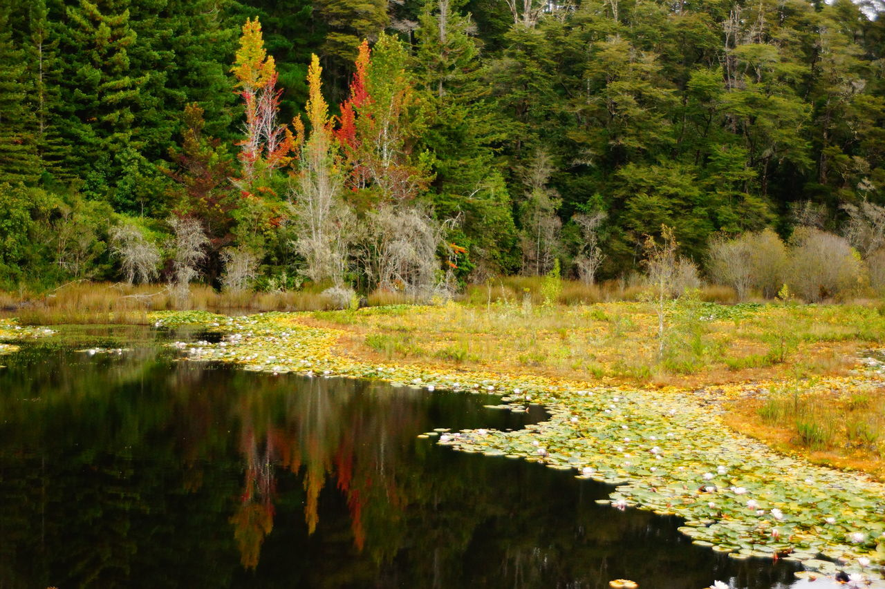 Autumn landscape Autumn Beauty In Nature Day Fall Flower Lake Landscape Nature Nature No People Outdoors Reflection Scenics Sky Tranquility Tree Water
