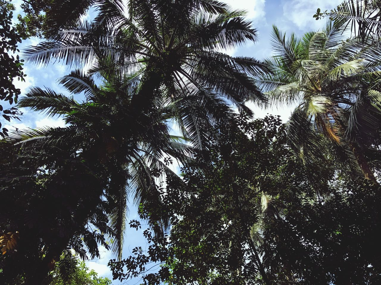 Outdoors Tree Low Angle View Nature Palm Tree No People Beauty In Nature Green Color Island