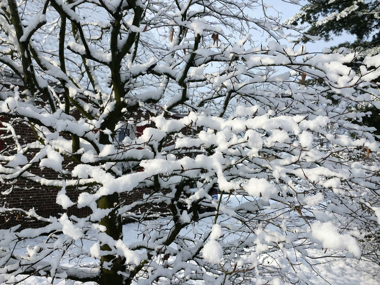Snow Covered Bare Tree During Winter