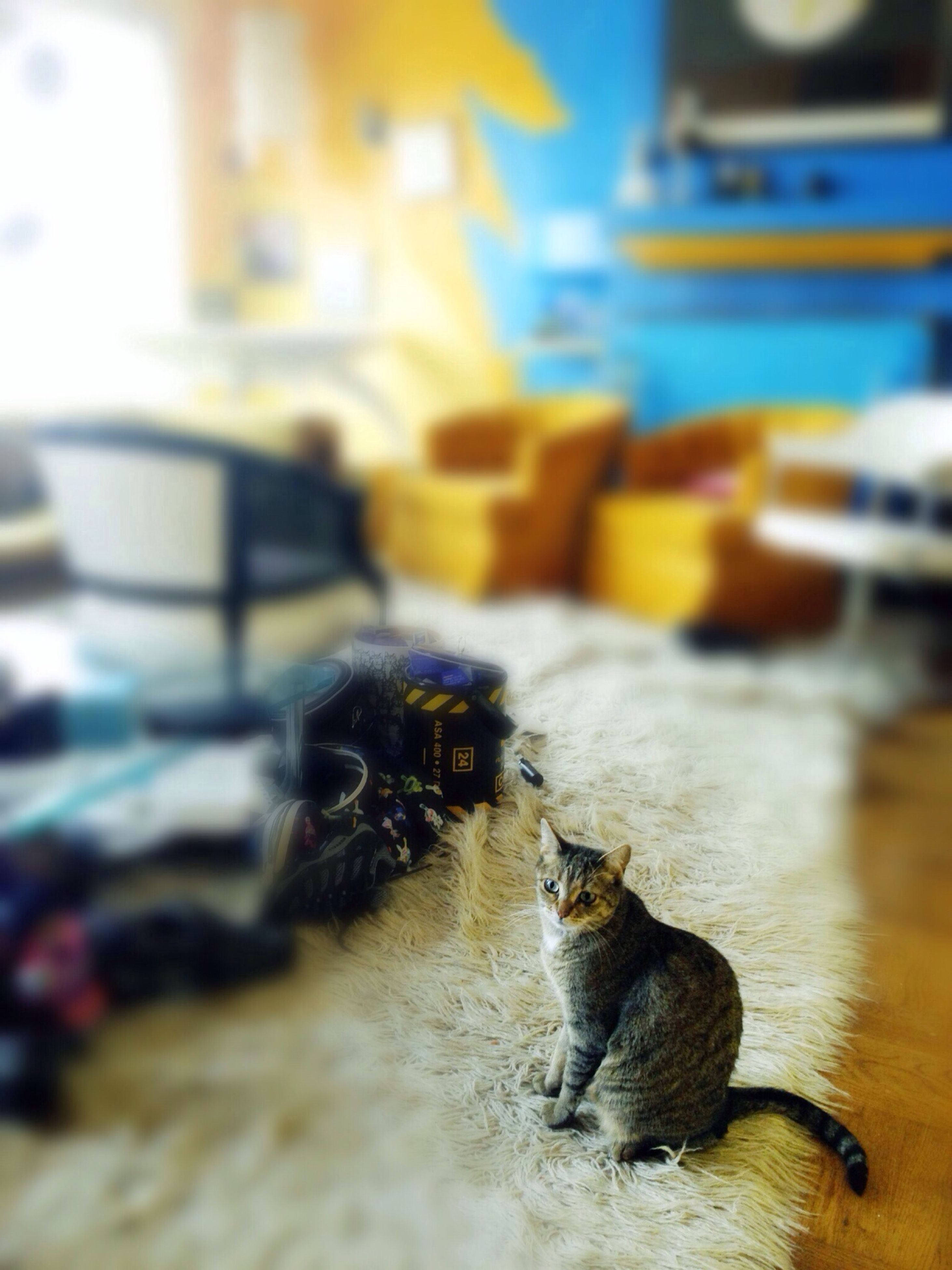 pets, domestic animals, animal themes, one animal, mammal, indoors, domestic cat, cat, dog, focus on foreground, selective focus, relaxation, feline, home interior, resting, lying down, close-up, whisker, table, home