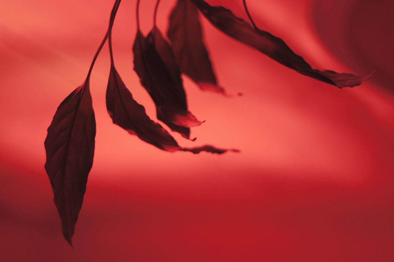 Close-up Leaf No People Red Surrealistic Fine Art Photography Sensual_photo Sensitive Fantasy Dreaming Fantasy