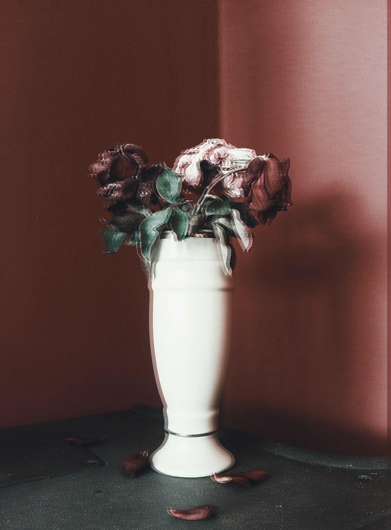 Flowers Flowerporn Roses DeadRoses Dead Flowers