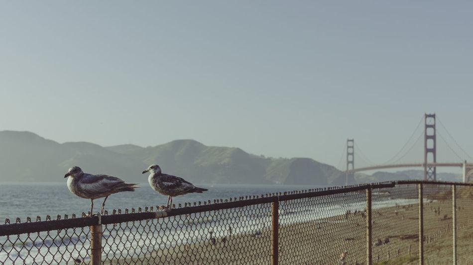 Beautiful stock photos of san francisco, Bridge - Man Made Structure, Copy Space, Cute, Fence