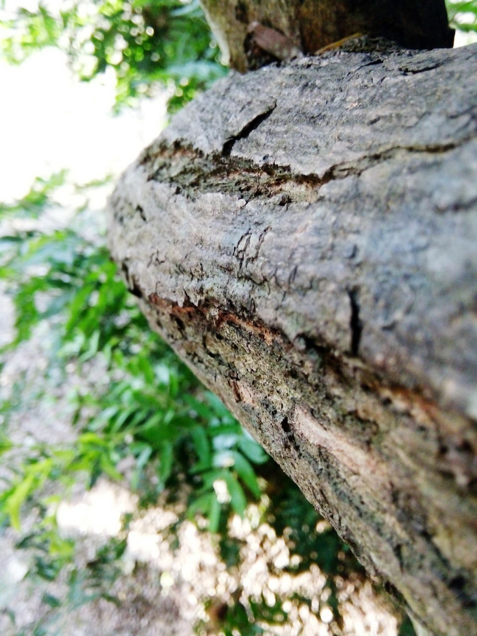 tree trunk, textured, day, tree, close-up, outdoors, rough, nature, no people, wood - material, bark, animals in the wild, tree stump, animal themes