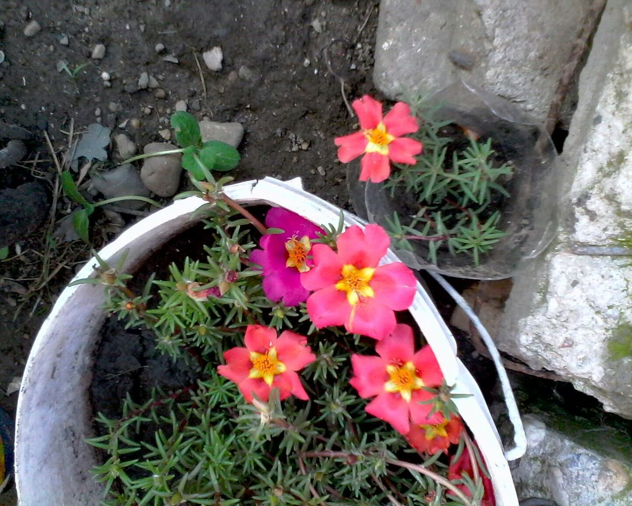 Unedited Photo Flower Pot A Bird's Eye View Pink Color In Bloom Ionitaveronica Wolfzuachis @wolfzuachis Eyeemphoto Looking Down Eyeem Market Directly Above No People Blossom Nature Flower Plant Flower Head Bunch Of Flowers Outdoors Blooming Bouquet Flowers Flower Pots Ghetisoara