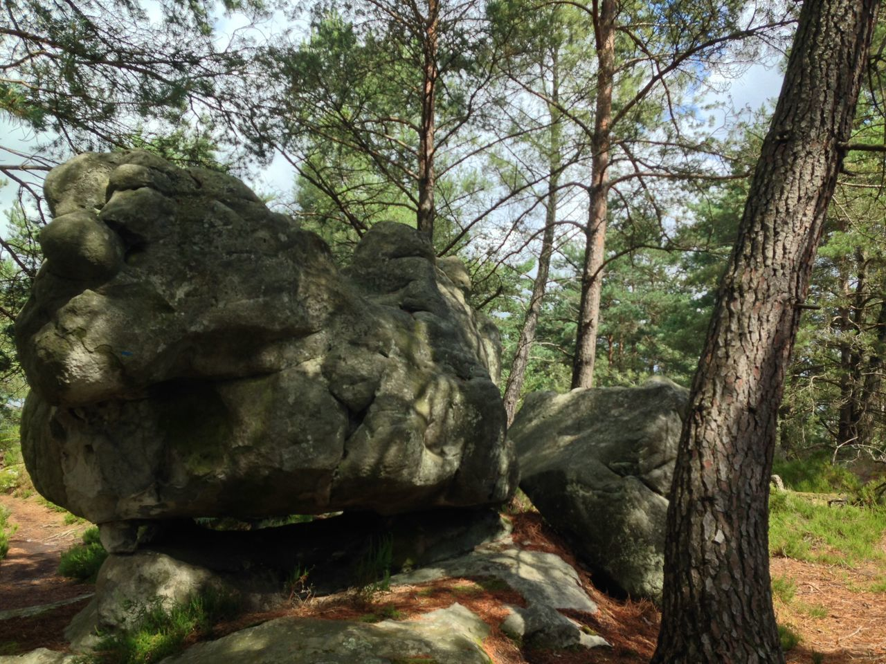 Tree Rock - Object Nature Day Outdoors No People Forest Tranquility Moss Travel Destinations Tree Trunk Beauty In Nature Scenics Branch Sky