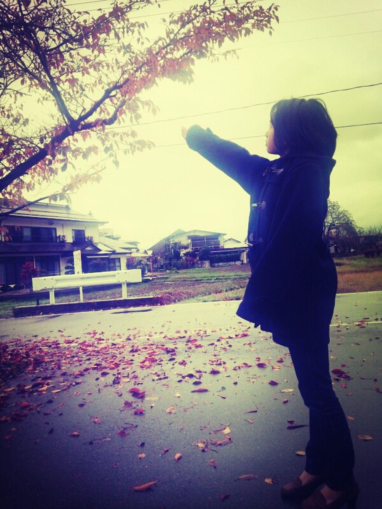 落ち葉が風でなくなっちゃう(笑)