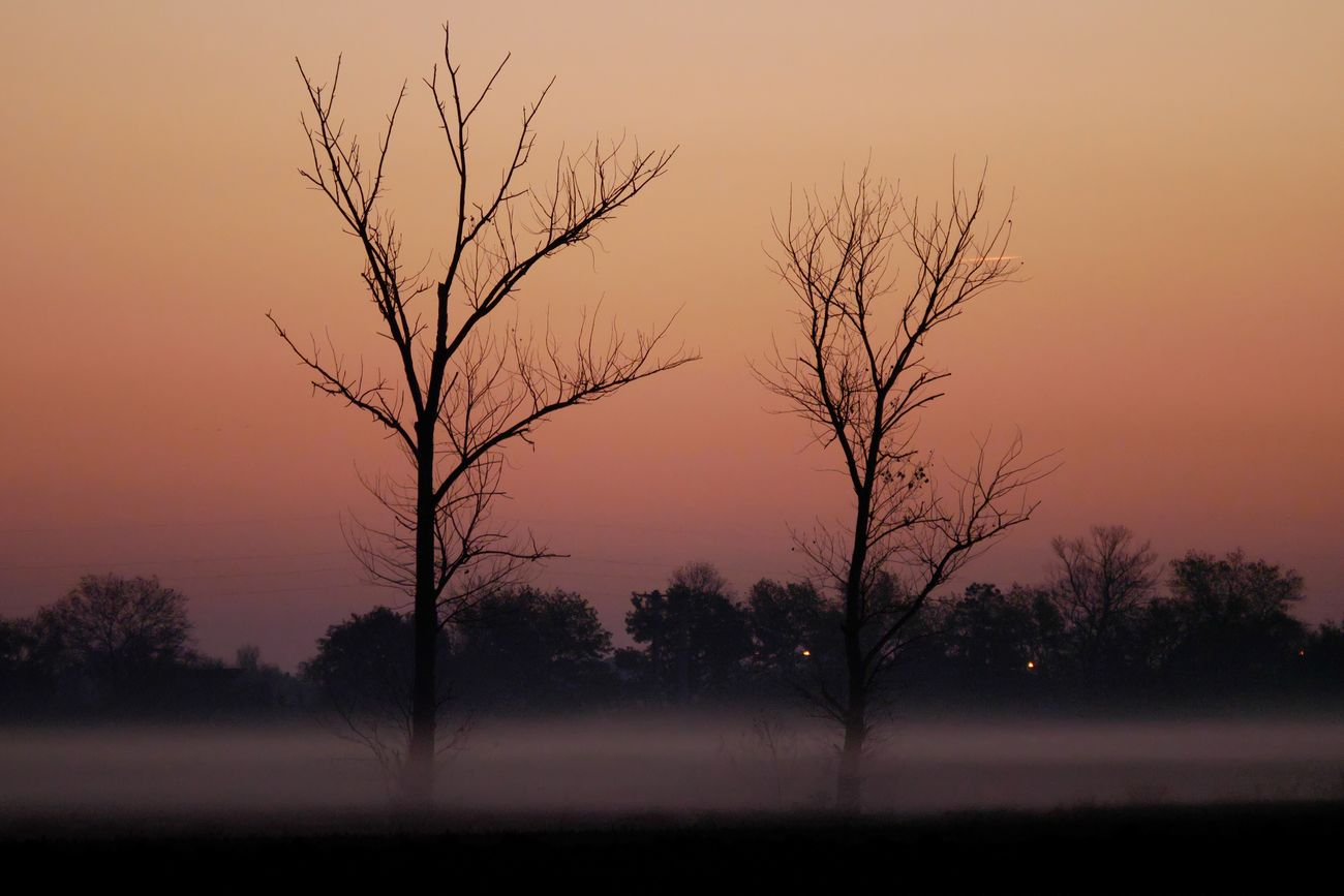 Matin brumeux à Castelnaudary Castelnaudary Occitanie France Sunrise Fog Foggy Foggy Morning Mist Misty Morning Tree Tranquility Nature Silhouette Landscape Branch