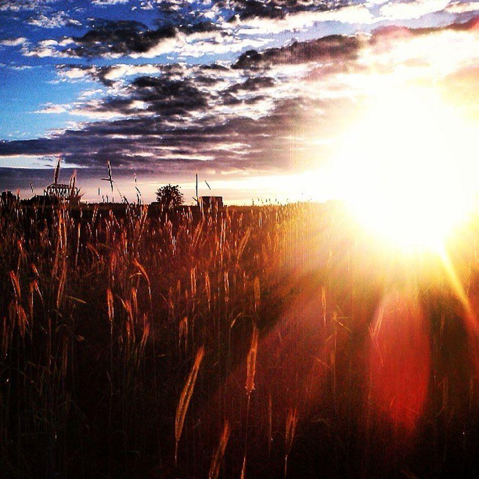 лепота Природа поле Russia