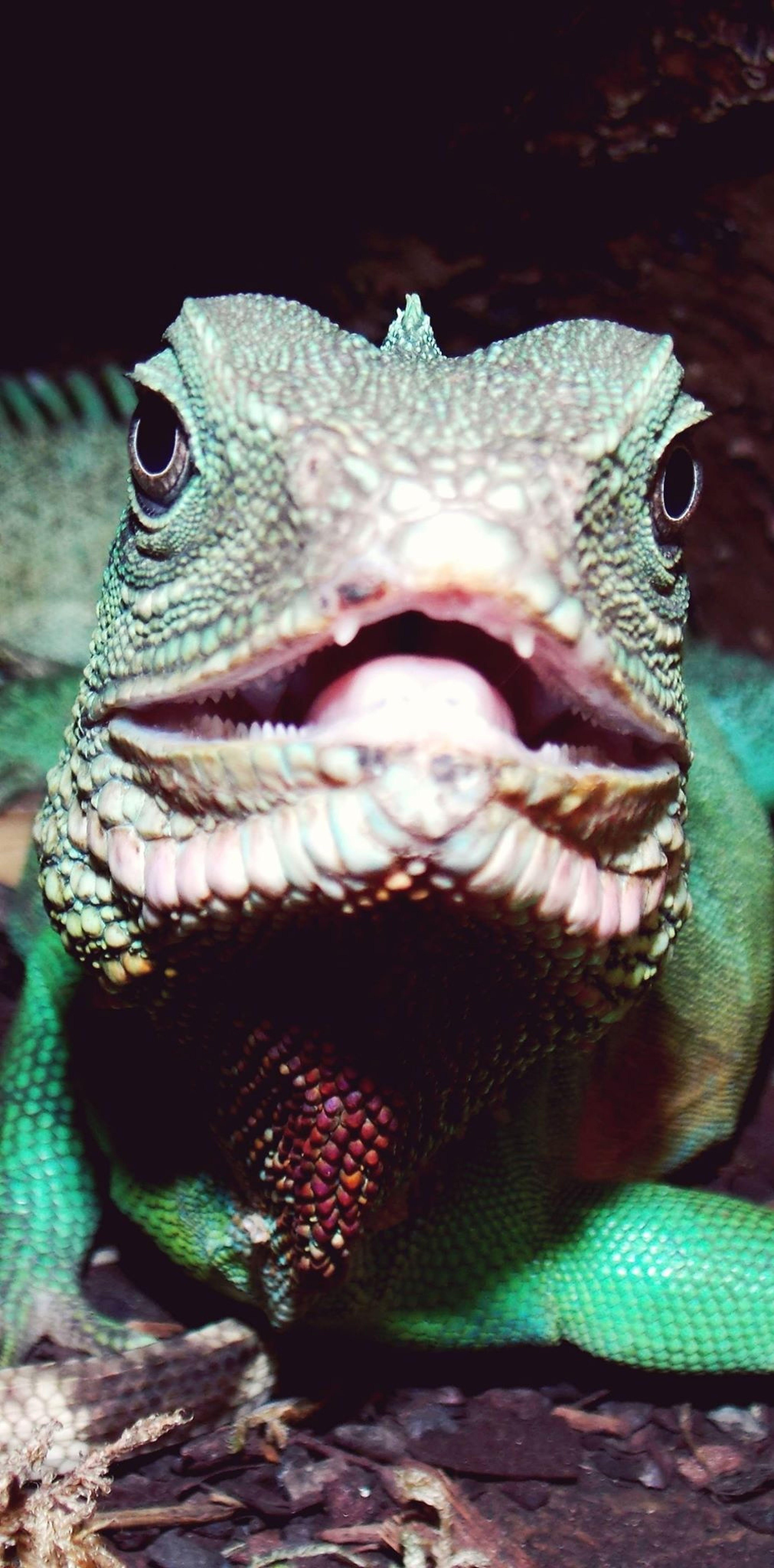Reptile World Animal Dragon D'eau Followme mes animaux une partie de ma vie