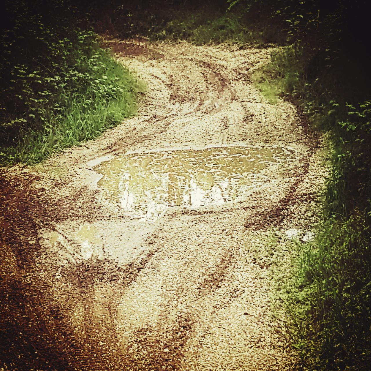 road, the way forward, day, outdoors, no people, tire track, plant, nature, grass, tree