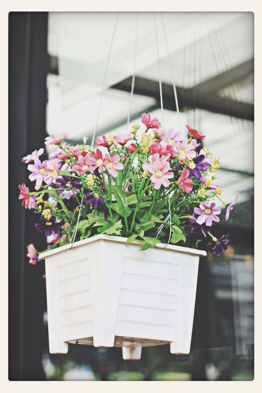 flower, plant, growth, nature, freshness, beauty in nature, fragility, potted plant, day, no people, outdoors, close-up, flower head