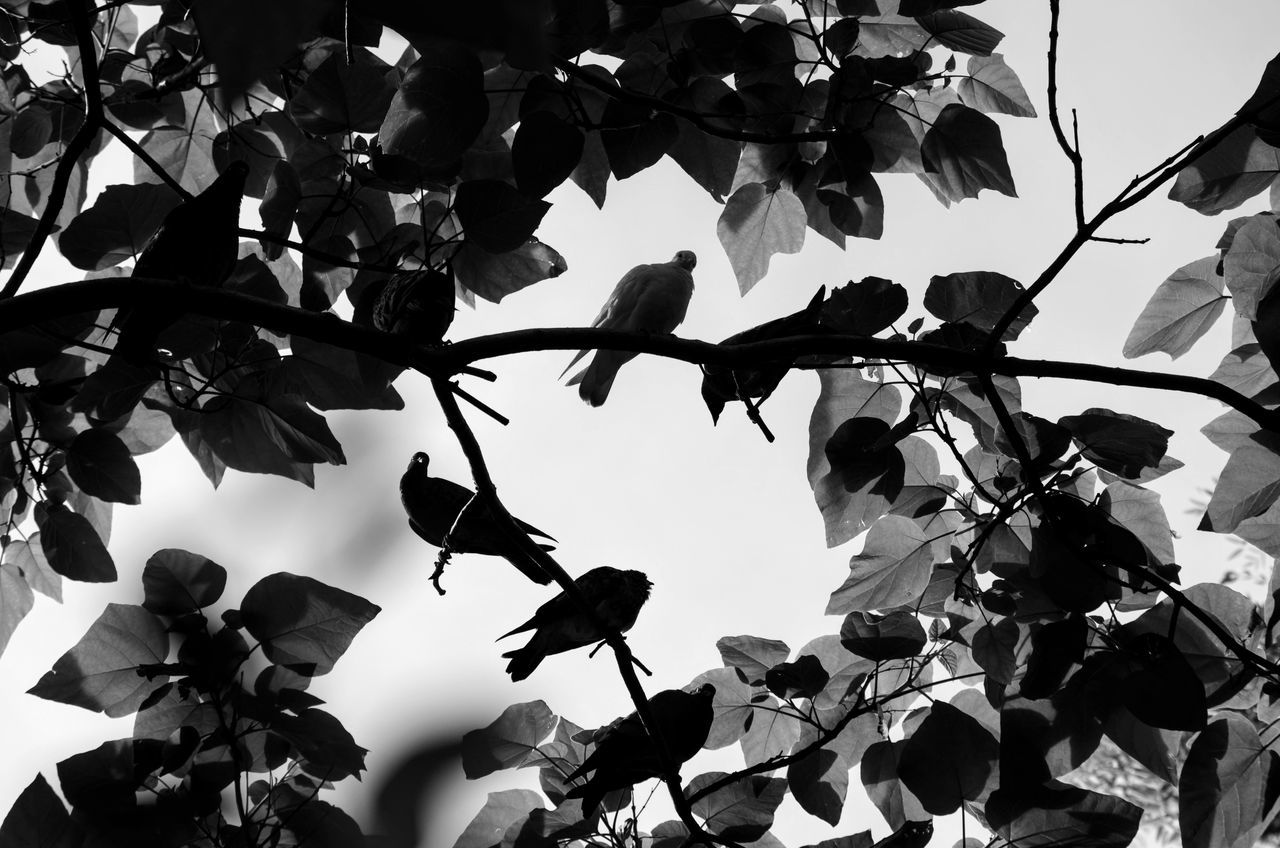 Birds in a tree Beauty In Nature Branch Close-up Day Flower Fragility Freshness Growth Leaf Low Angle View Nature No People Outdoors Petal Plant Sky Tree