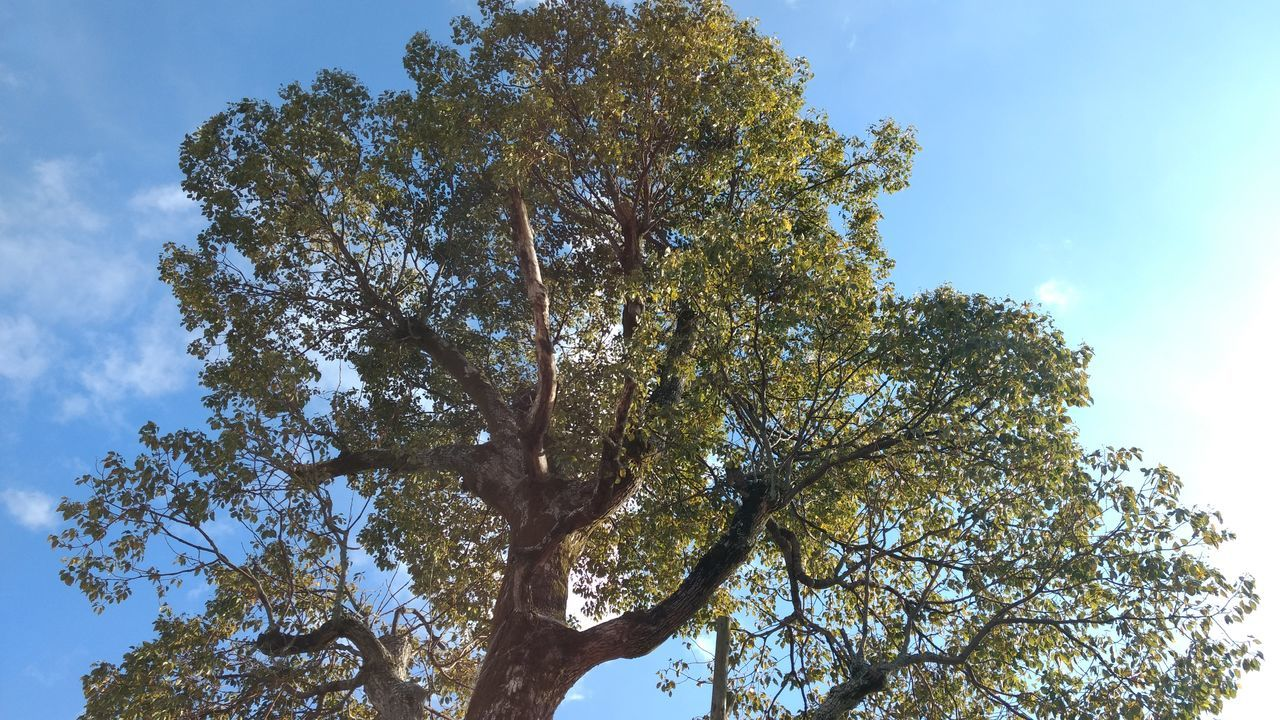 tree, low angle view, nature, growth, branch, day, beauty in nature, sky, outdoors, no people