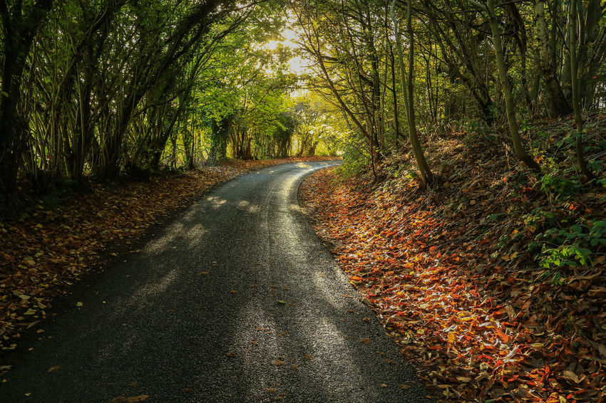 Narrow single-track country lane just a few yards from a very busy motorway. Autumn Beauty In Nature Branch Bromsgrove Day Growth Landscape Leaf Narrow Lane Nature No People Outdoors Road Scenics The Way Forward Tranquil Scene Tranquility Tree Tree Trunk