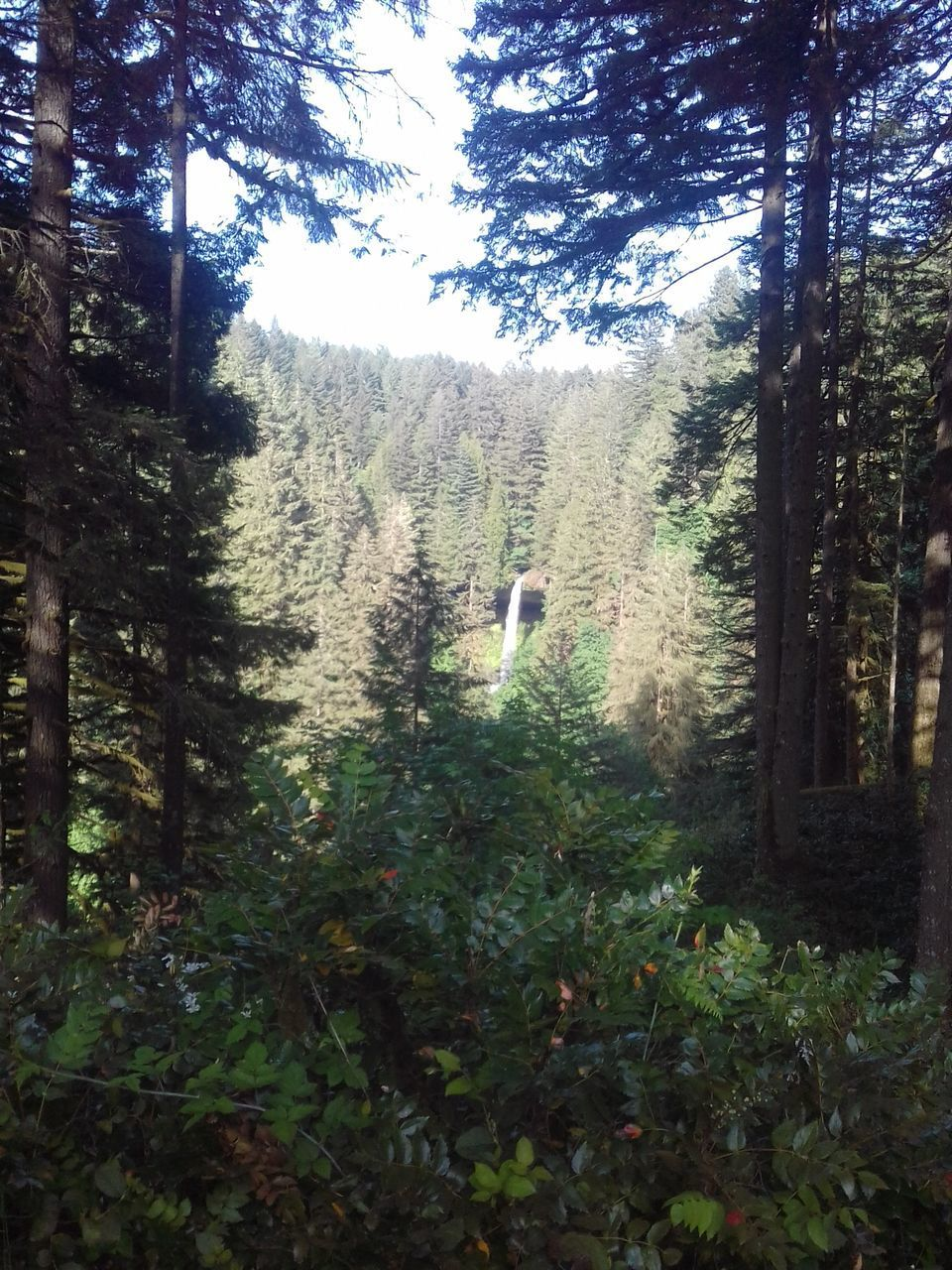 tree, growth, forest, nature, one person, plant, day, real people, beauty in nature, outdoors, sky, people