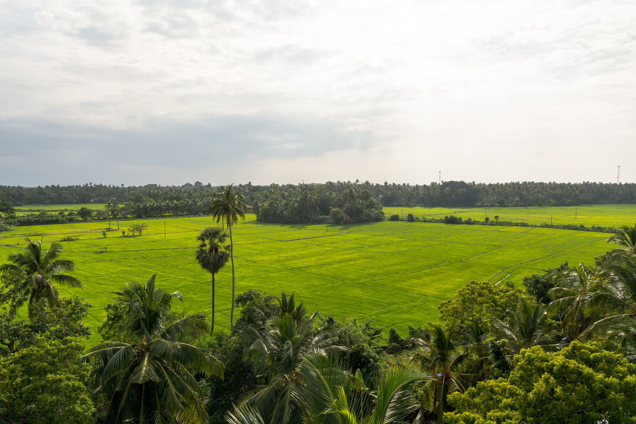 Agriculture Beauty In Nature Day Field Green Color Growth Jungle Landscape Nature No People Outdoors Remote Location Rice Fields  Rural Scene Scenics Scenics Landscape Sky Sri Lanka Tranquil Scene Tranquility Travelling Tree Tropical Forest
