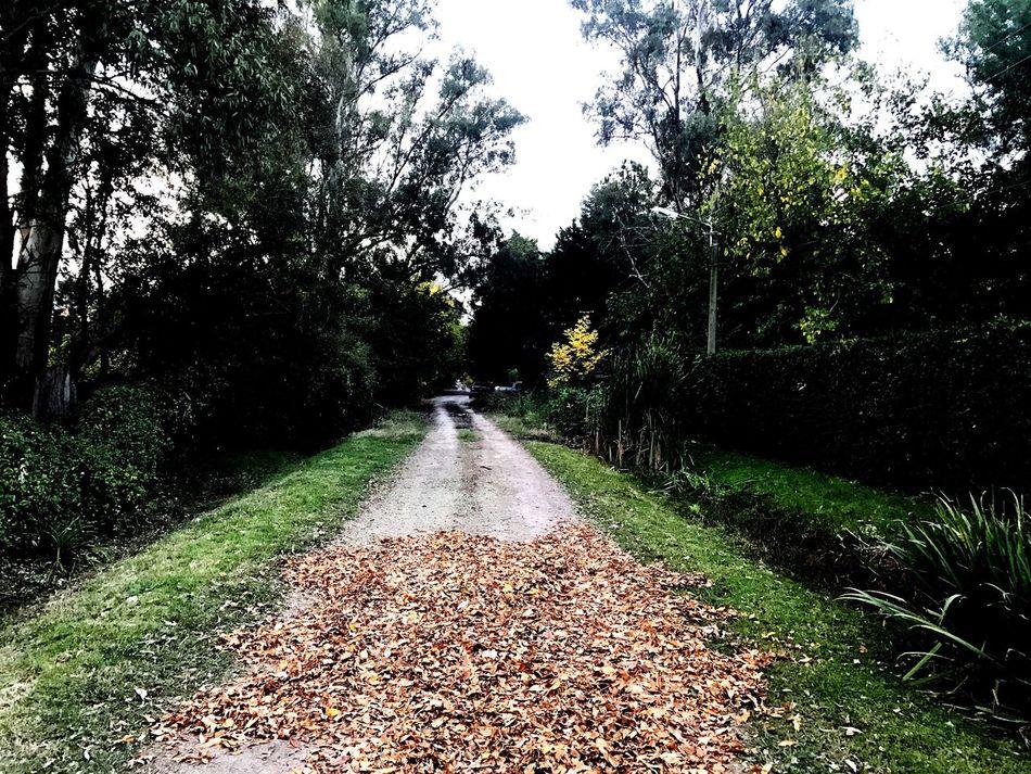 Caminos Senderos Green Nature_collection Nature Photography Nature Peace Autumn Colors Autumn Autumn🍁🍁🍁