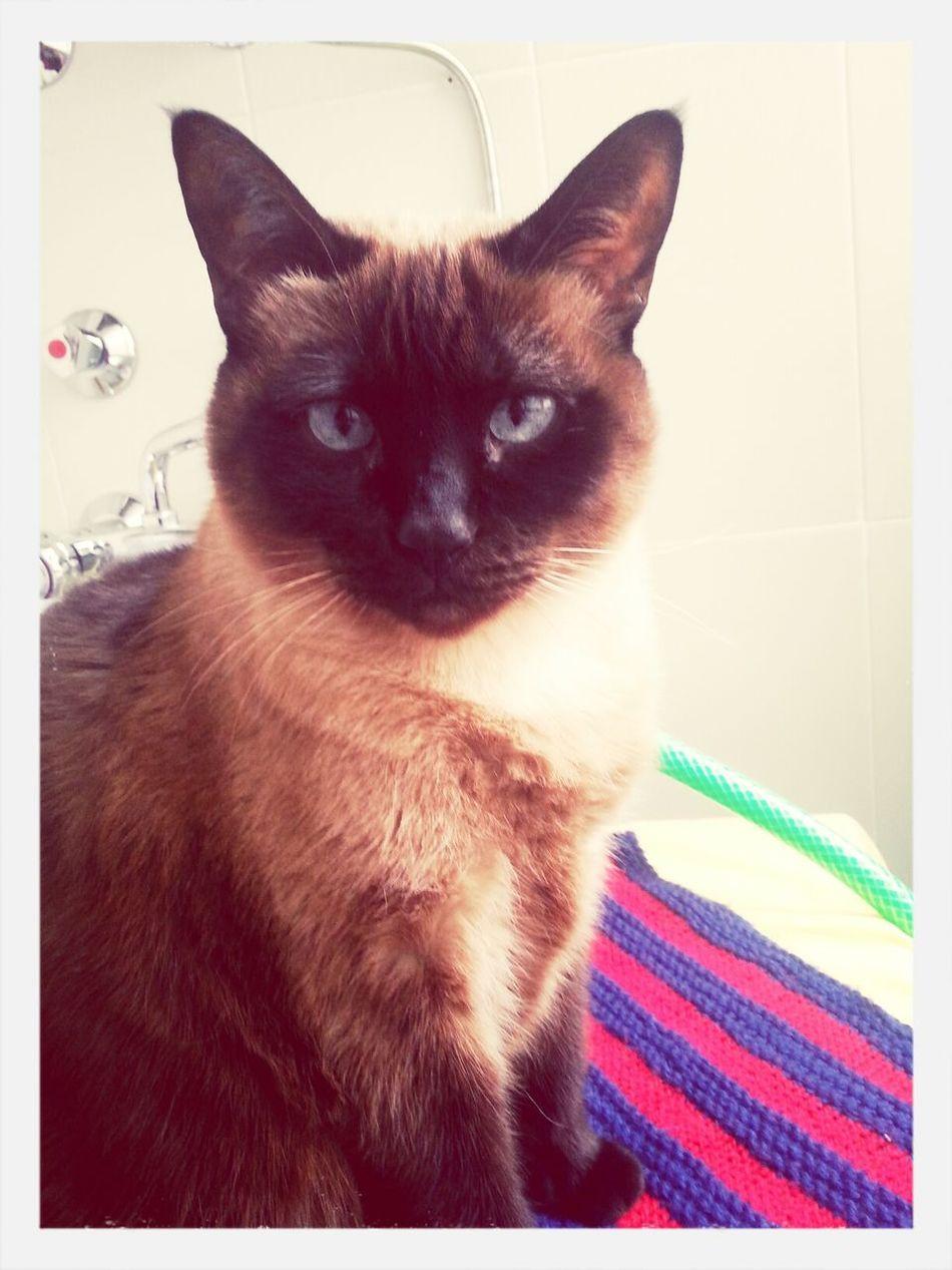 Cat Mi pequeña