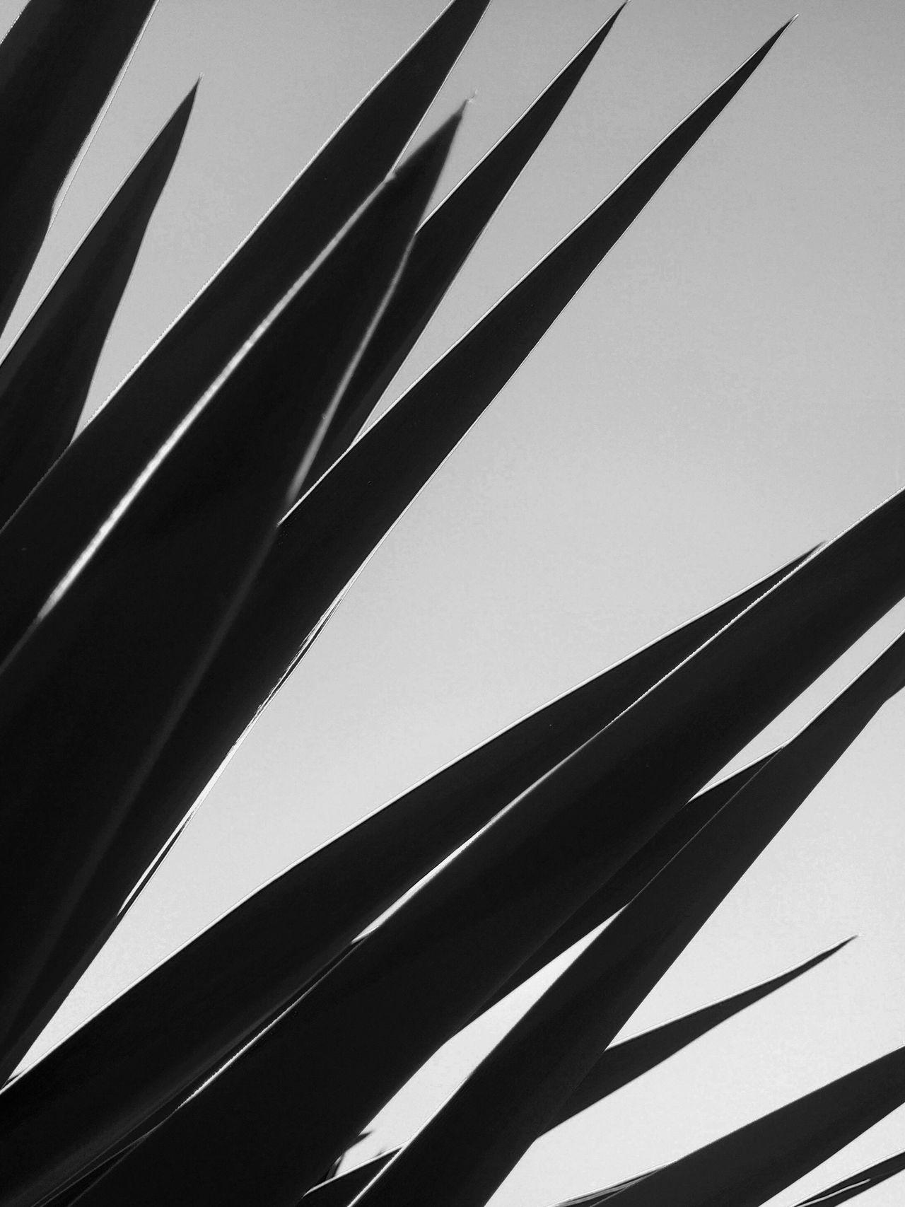 Monochrome Photography Sharp Pattern