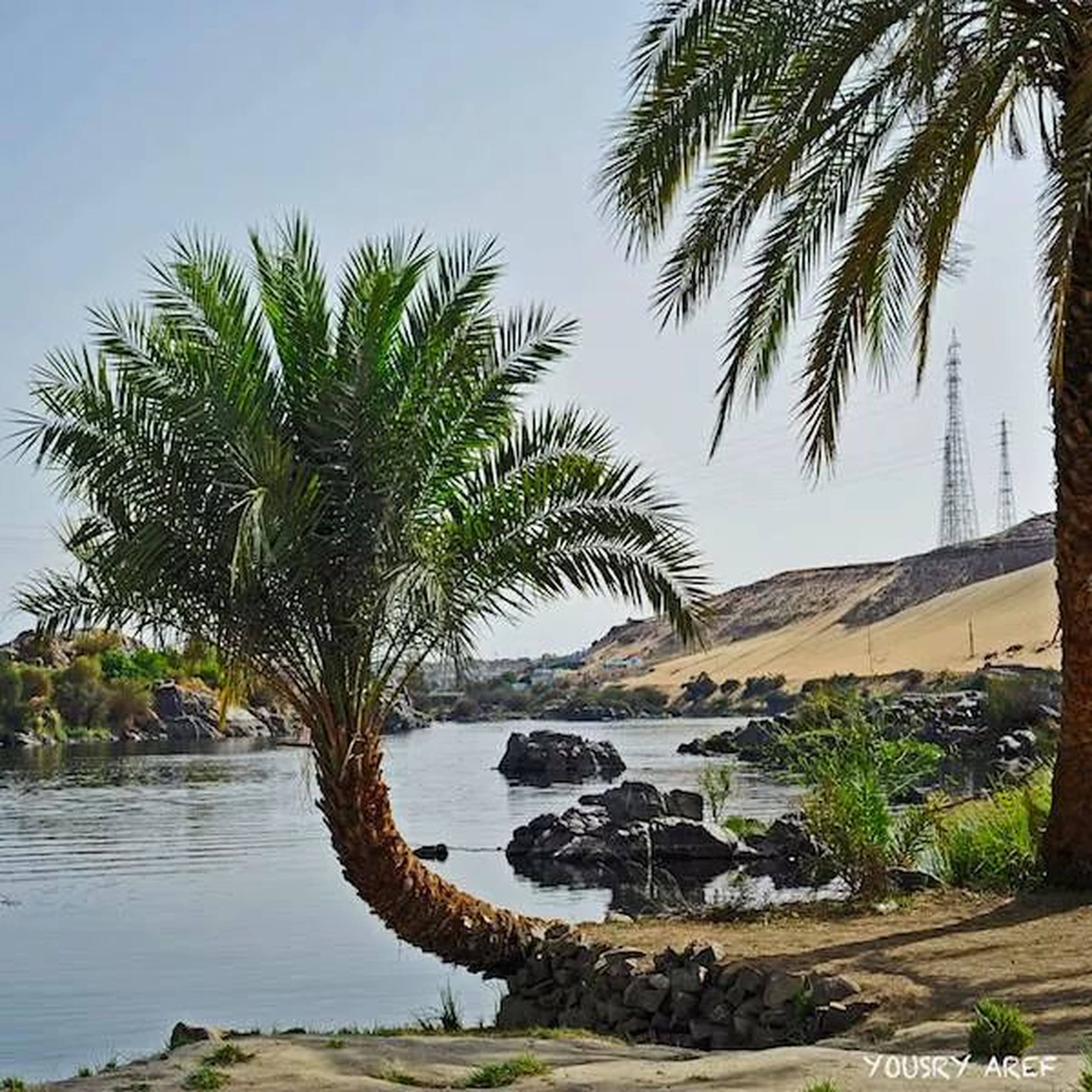 tree, palm tree, water, tranquil scene, tranquility, scenics, clear sky, nature, beauty in nature, beach, sea, growth, sky, shore, green color, tree trunk, sand, rock - object, mountain, idyllic