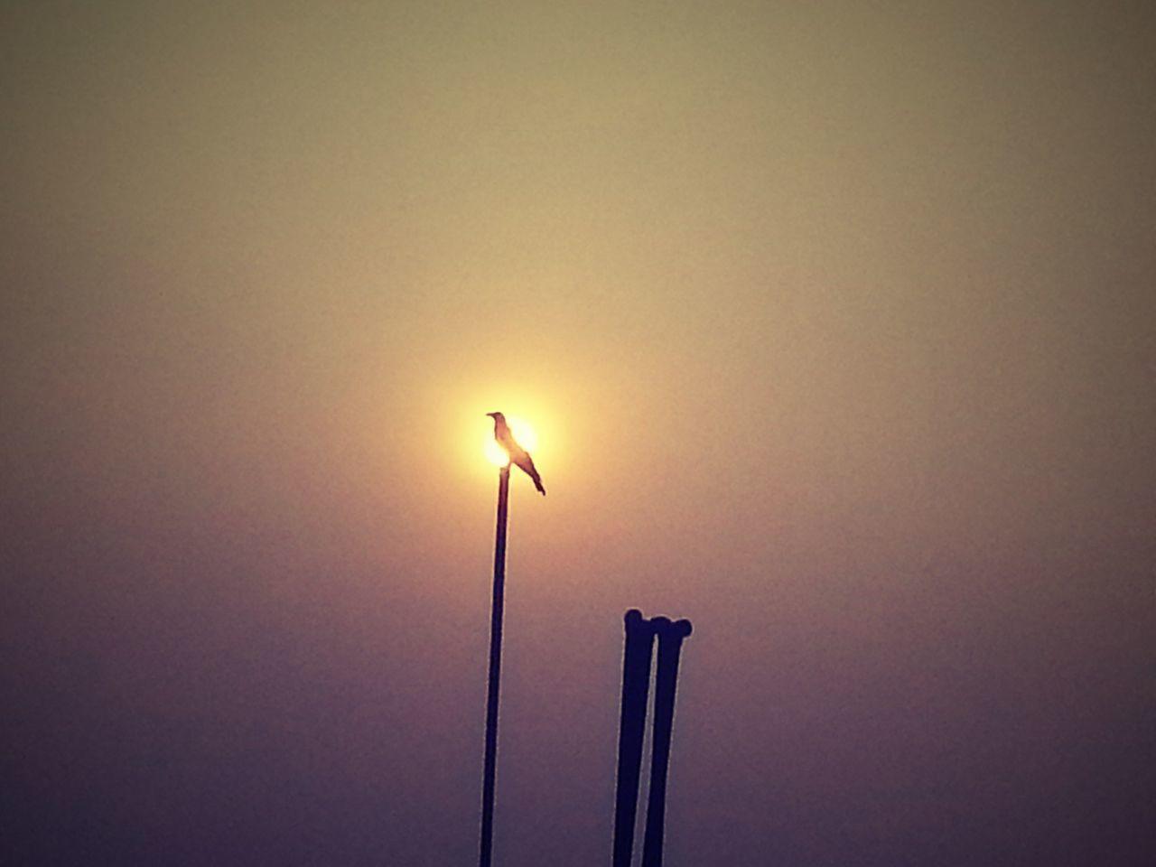 The bird is on fire Hunger Games Bird Myna Dusky Sky Sunset Evening Sky