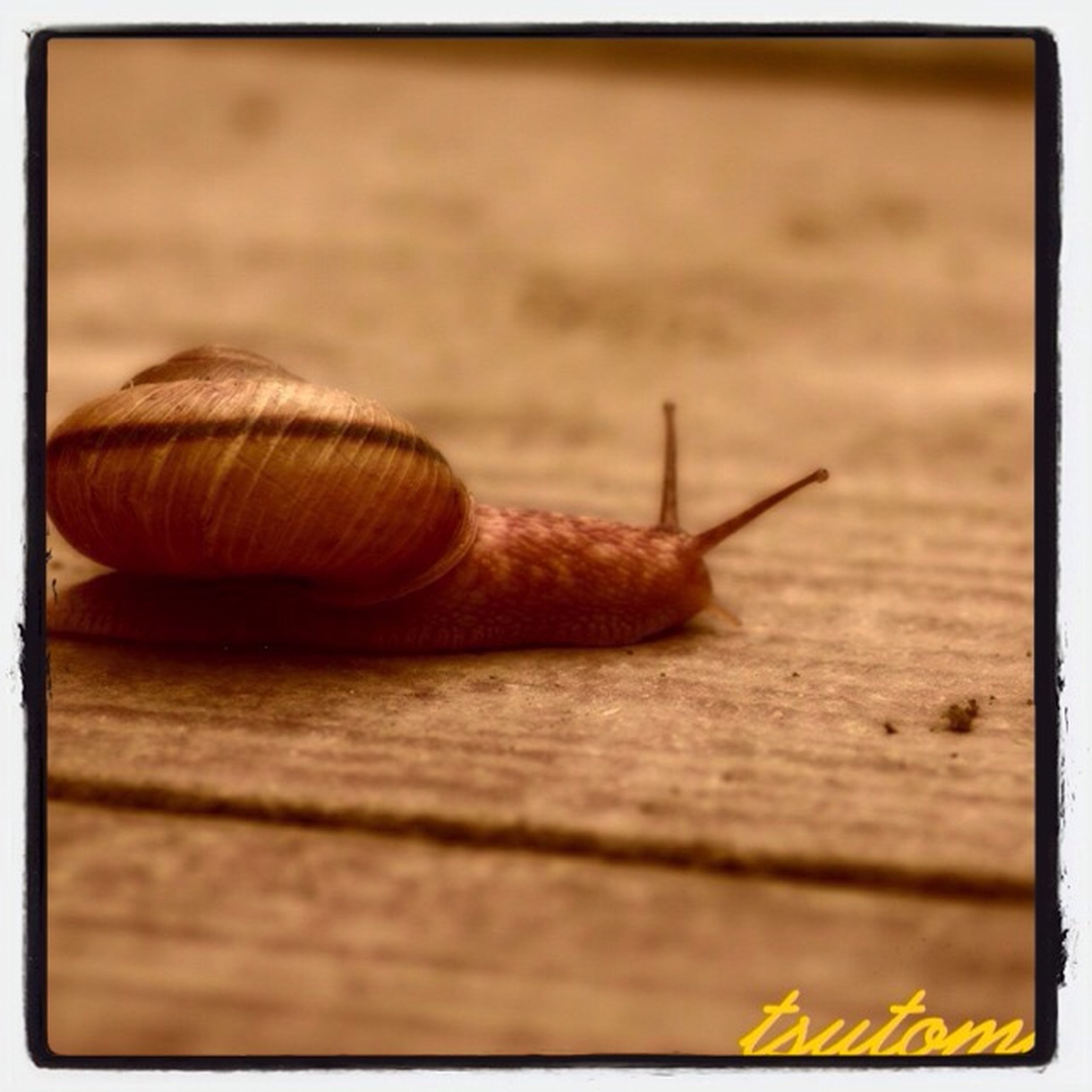 animal themes, one animal, animals in the wild, wildlife, transfer print, close-up, insect, wood - material, auto post production filter, snail, wooden, wood, selective focus, plank, animal shell, brown, focus on foreground, day, textured, outdoors