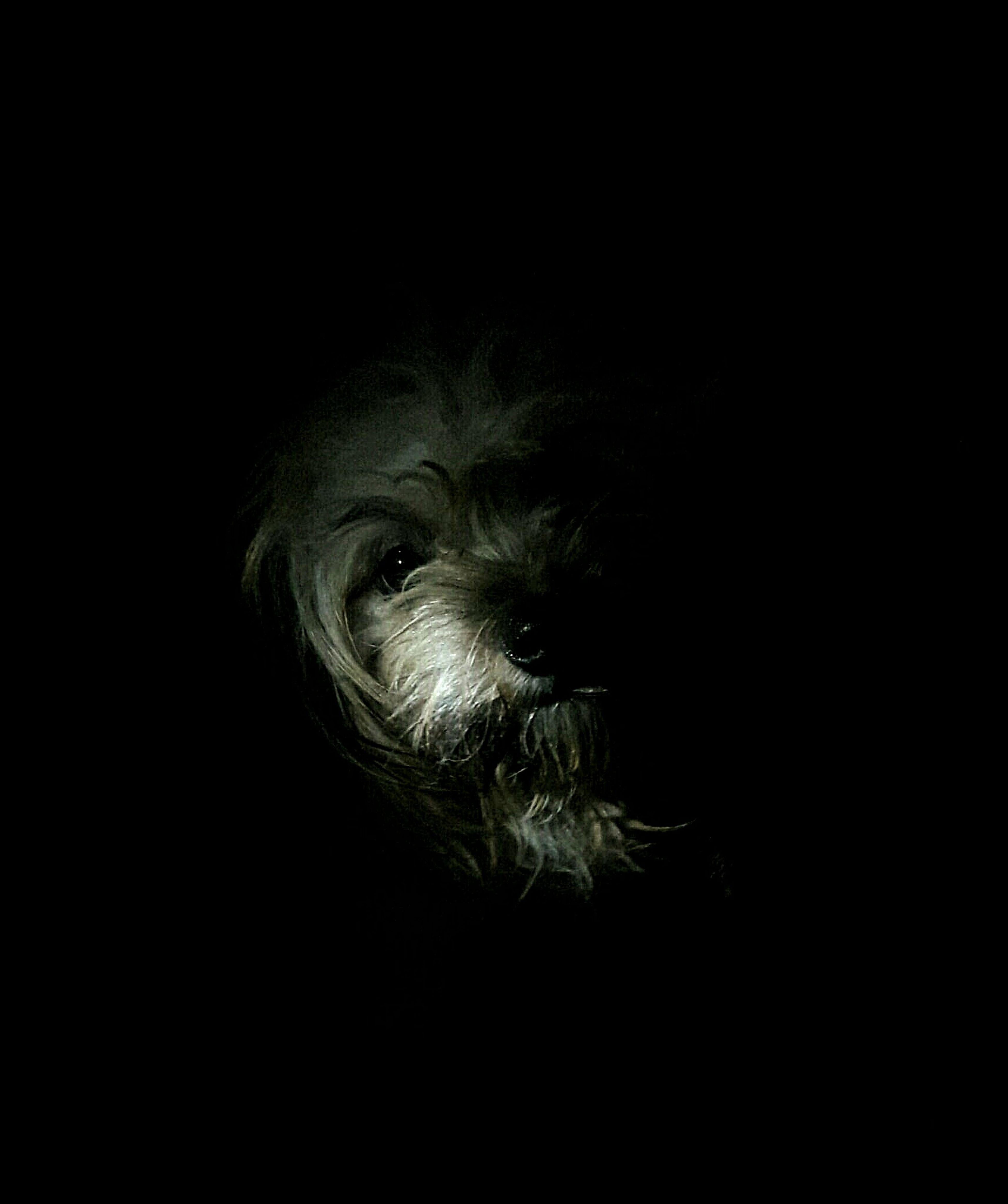 Need not to be afraid of the dark... Animapix 7th Lowkey  PhonePhotography