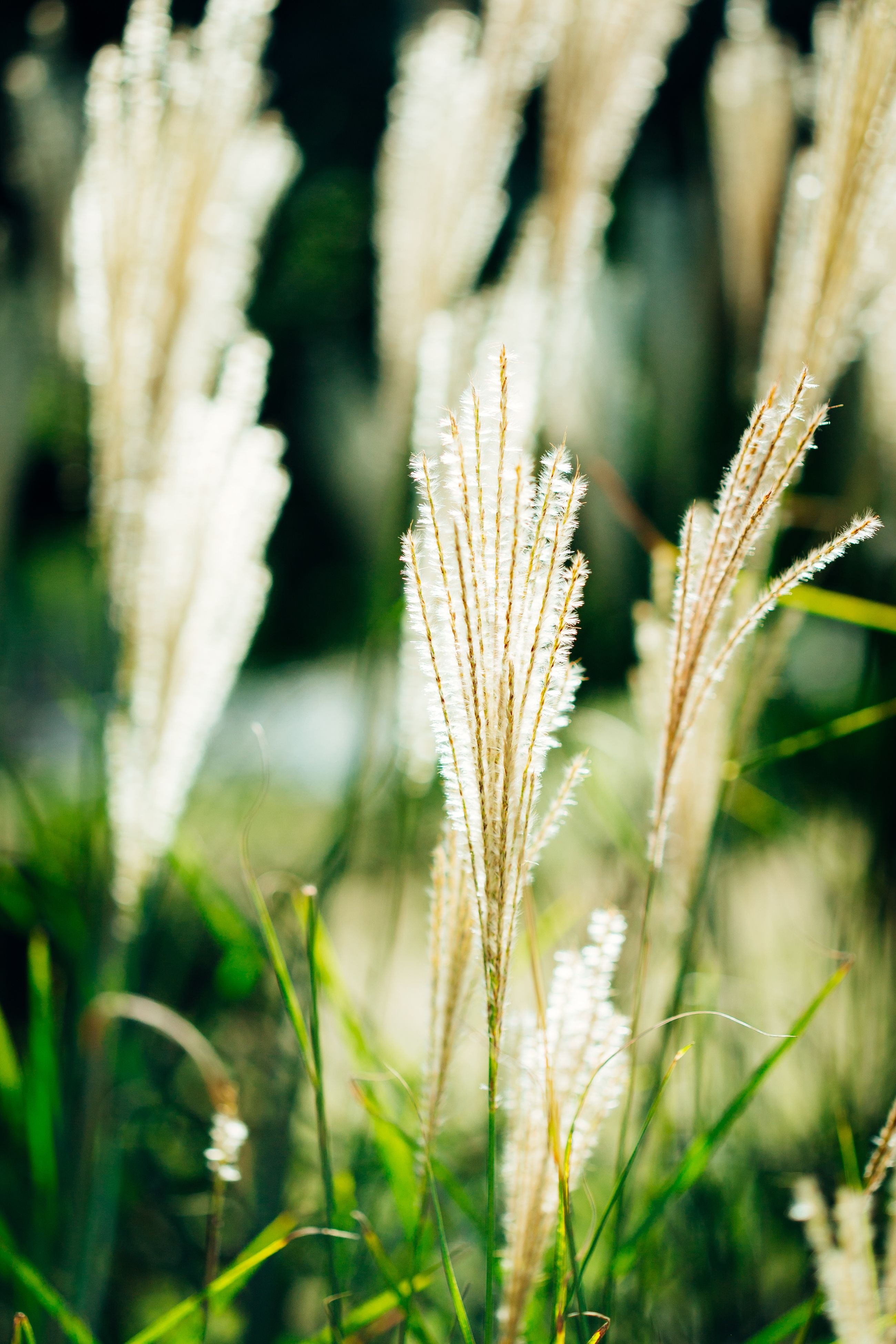 focus on foreground, growth, close-up, plant, selective focus, grass, nature, field, stem, beauty in nature, freshness, tranquility, fragility, growing, day, outdoors, uncultivated, blade of grass, no people, green color
