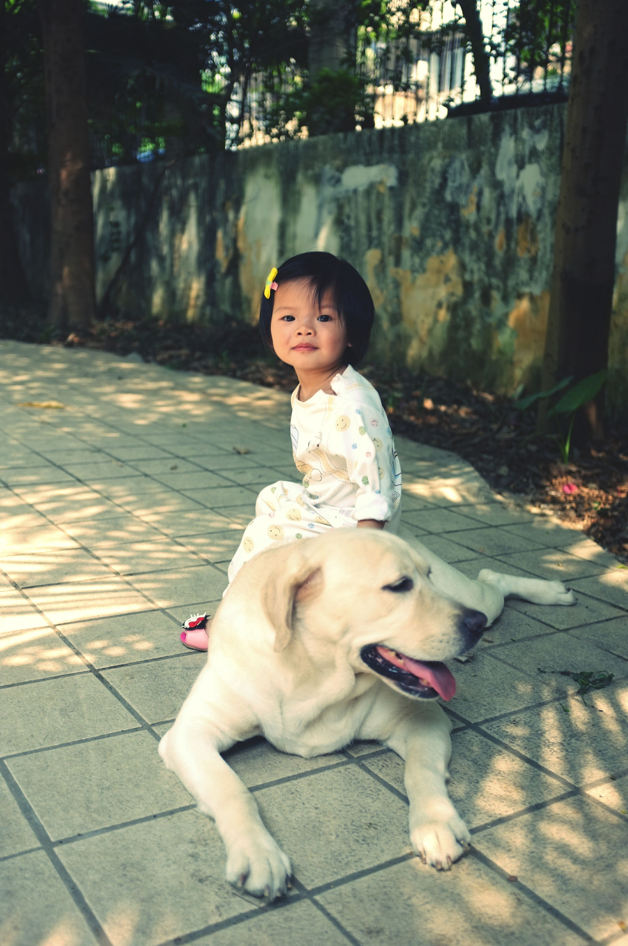dog, pets, full length, childhood, cute, looking at camera, portrait, elementary age, sitting, person, animal themes, one animal, innocence, domestic animals, mammal, front view, girls, boys