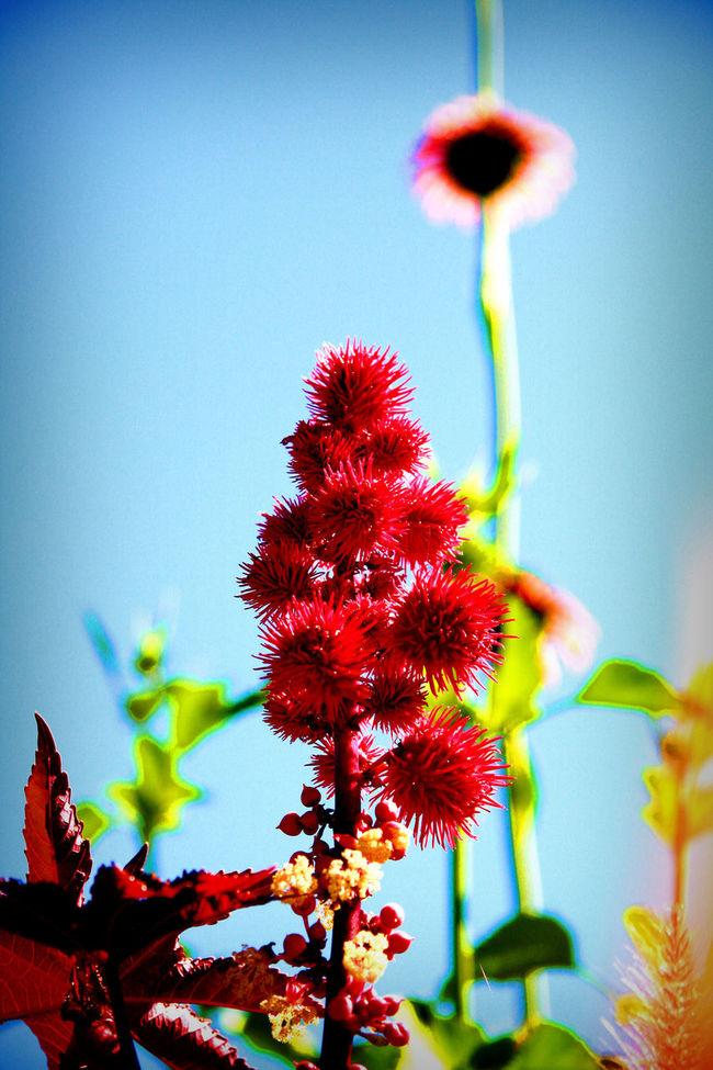 Red Florals Blue Sky Colorful Colorado Denver,CO The00Mission