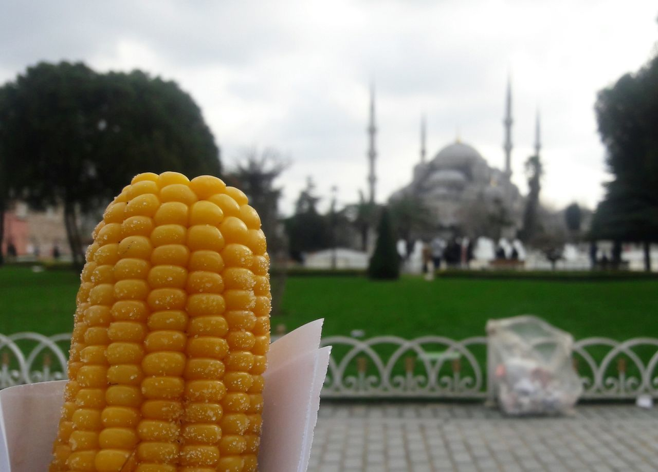 🌽Corn Mısır Sultanahmet Cami Blur Bluemosque Yellow Foodporn Food Street Food Travel City Mosque EyeEm Gallery EyeEm Best Shots EyeEm Istanbul Turkey The Street Photographer - 2017 EyeEm Awards