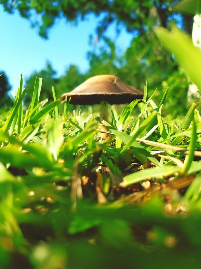 Fresh food,natural food,mushroom,outdoors,