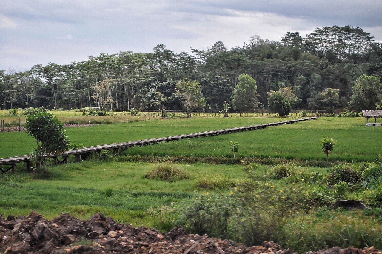 Setiap keliling daerah kalimantan saya senang menemukan hamparan Sawah Samboja Tenggarong Kutai Kartanegara